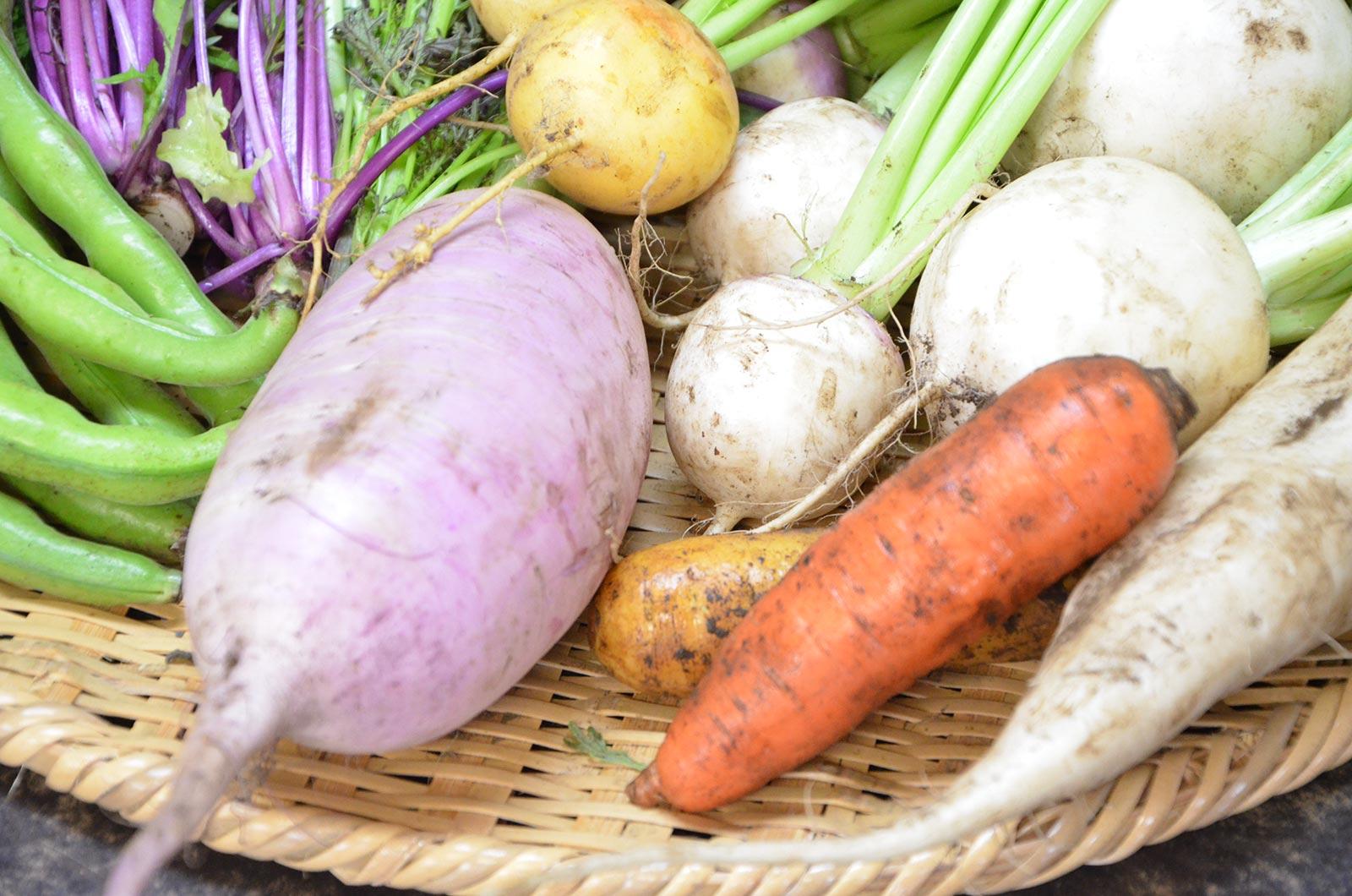 食育指導/栄養指導